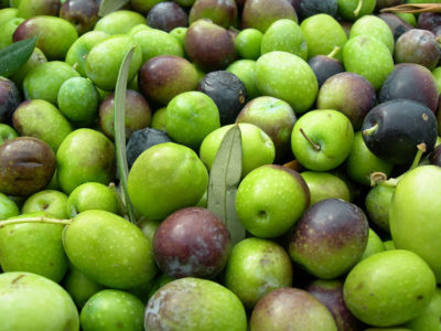 Olive oil festival
